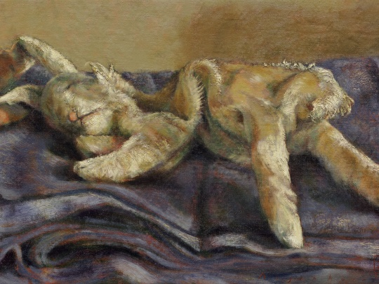 hare sleeping